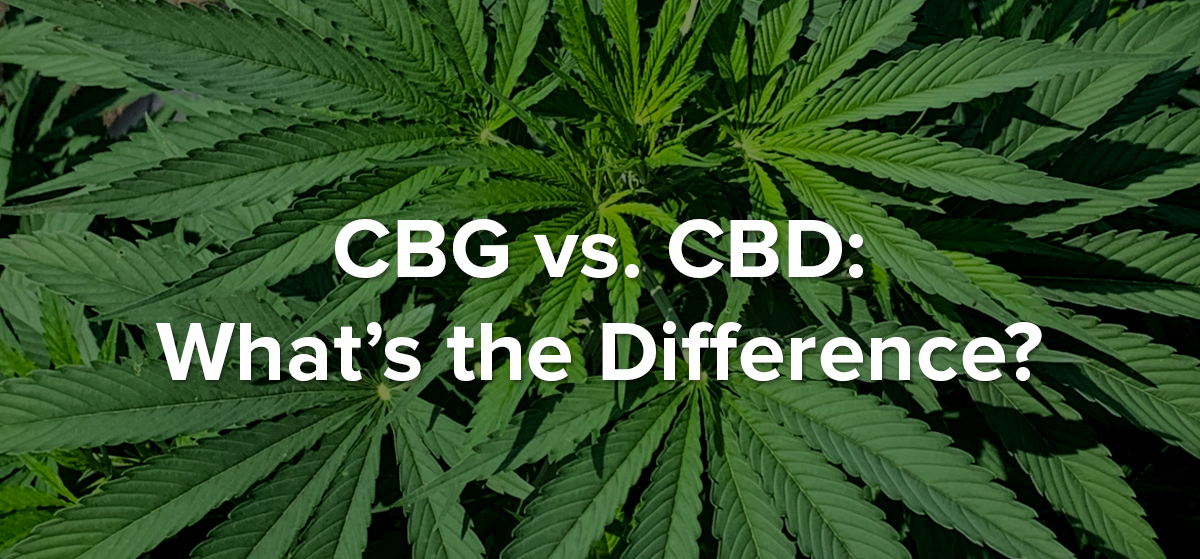 CBG vs CBD