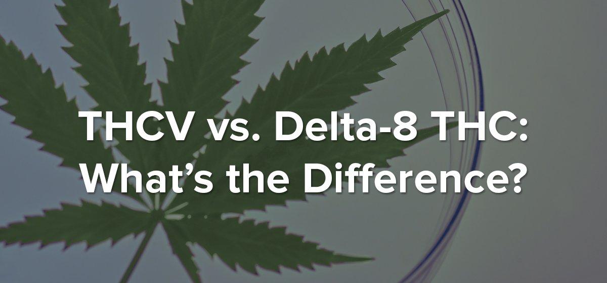Delta 8 THC vs THCV